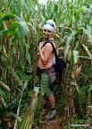 Kto pamięta jak Shrek przechodził przez pola kukurydzy?