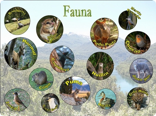 parque-nacional-los-alerces-15-728_thumb[2]