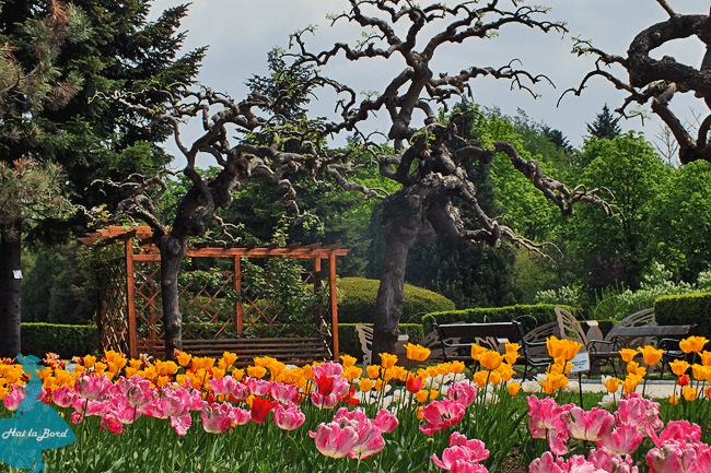 lalele gradina botanica iasi