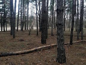 лес27.jpg