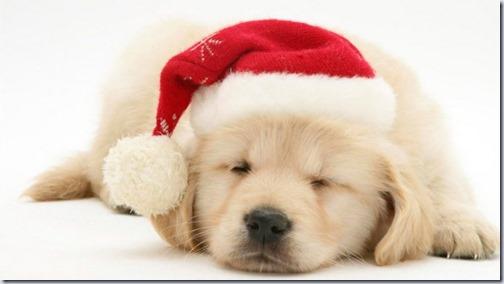 perro navidad (22)