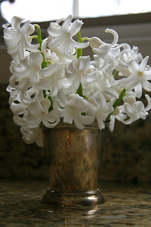 White hyacinths, Foto by Jaime Blogers