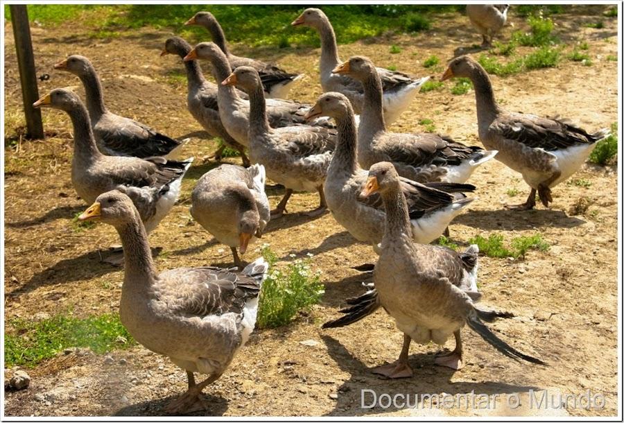 Quinta de foie gras; o que visitar na Dordonha