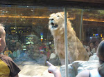 Down at MGM, the lions were playing around