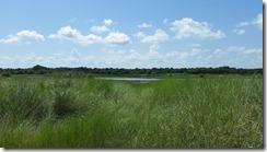 Lake beyond grass