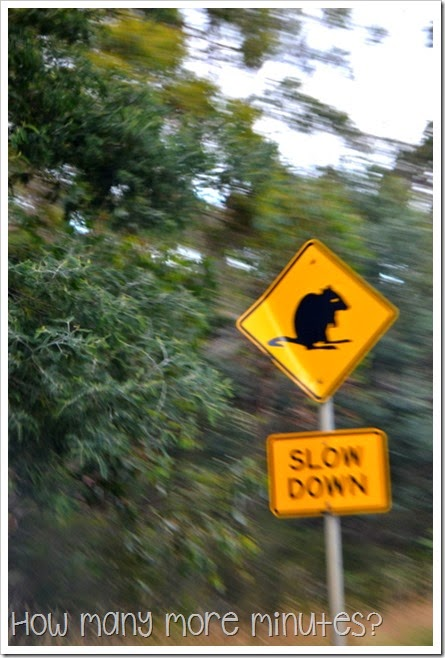 Pademelon Roadsign in Tasmania ~ How Many More Minutes?