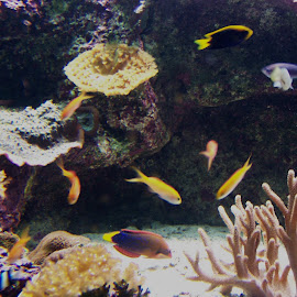 Great Barrier Reef by Sarah Harding - Novices Only Wildlife ( nature, underwater, fish, novices only, sea )