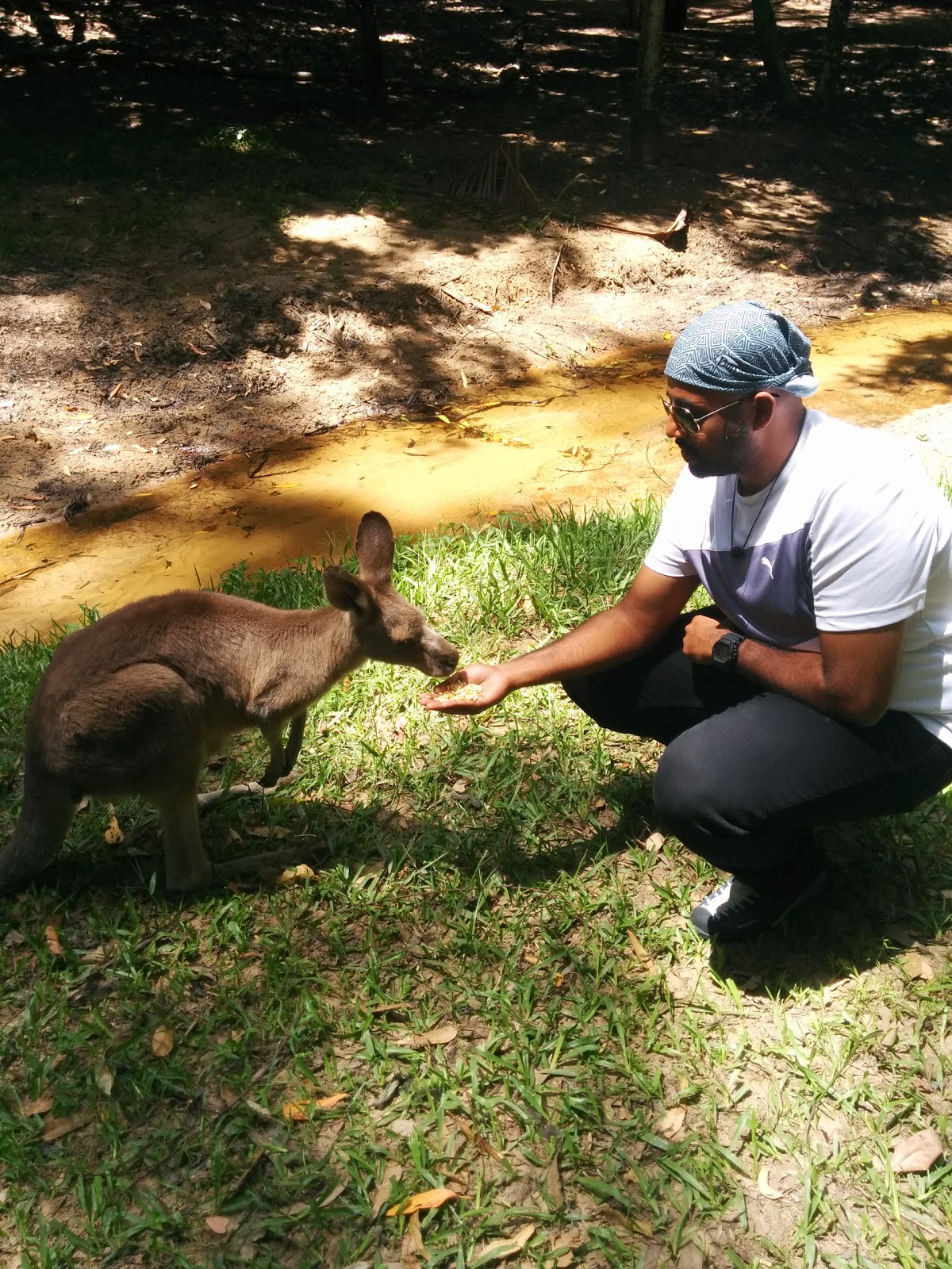 Feed a kangaroo at the Australia Zoo, Sunshine Coast