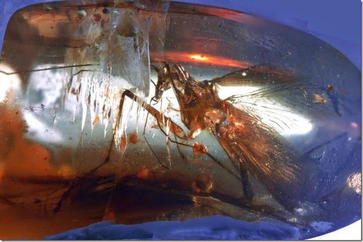 jurasic park mosquito en ambar