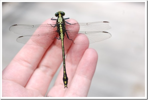 dragonfly hand (2) copy