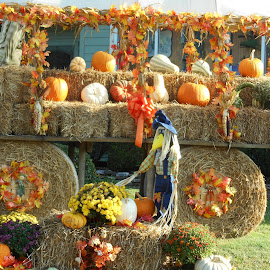 Fall Time Wagon by David Jarrard - Public Holidays Thanksgiving ( pumpkins, fall, decorations, wagons, halloween )