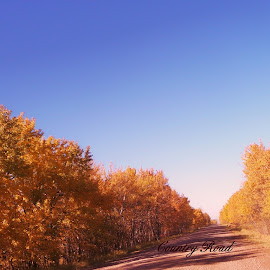 Country Road by Beverley Baltimore - Landscapes Travel