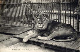 marseille lion