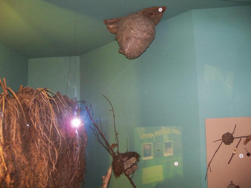 Houston Museum of Natural Science - 116_2855.JPG