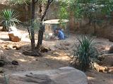 Jeff, Bryan and Hannah looking at the meerkats at the Nashville Zoo 09032011