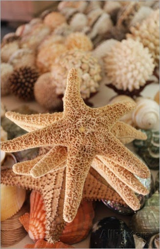 julien-mcroberts-dried-sea-stars-sold-as-souvenirs-zihuatanejo-mexico