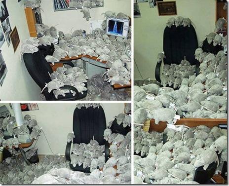 office-pranks-too-far-040