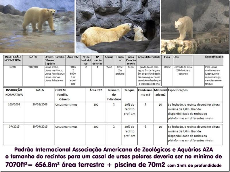 ursos_polares-normativas