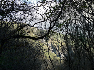 Dovedale through the trees