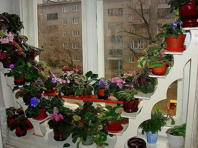 Полки на стену для цветов своими руками фото