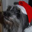 Elli Weihnachtsbild 2011.jpg
