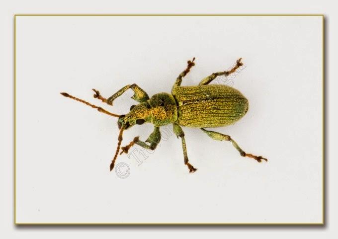 Bug 12 Net W