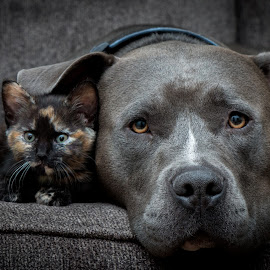 They are best friends by Casey Bebernes - Animals - Dogs Portraits