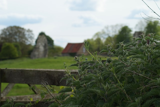 Norfolk countryside in spring