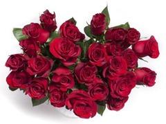 roses-982829_1920