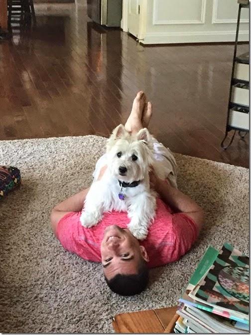 aj and yogi
