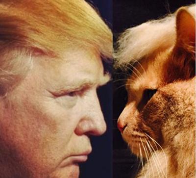 trumpycat