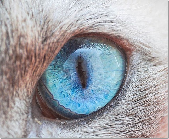 Cats Eyes4