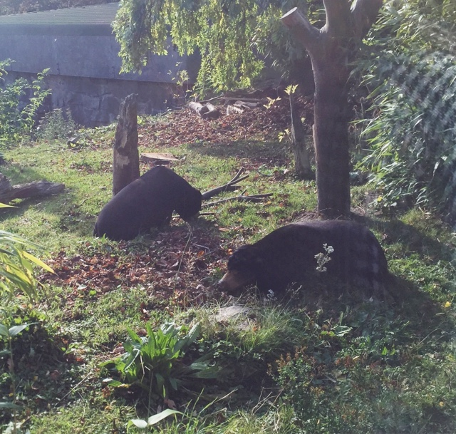 Edinburgh Zoo Sun Bears