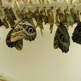 Houston Museum of Natural Science - 116_2871.JPG