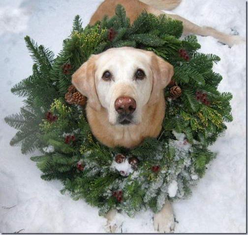 perro navidad (16)