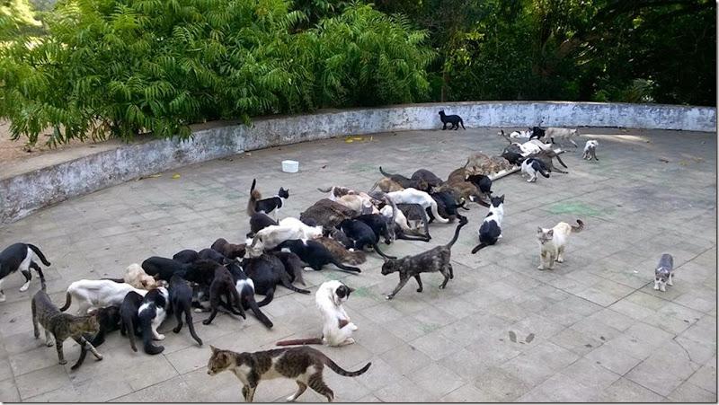 gatos_fome_fortaleza1
