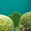 Buck Island Reef - IMGP1040.JPG