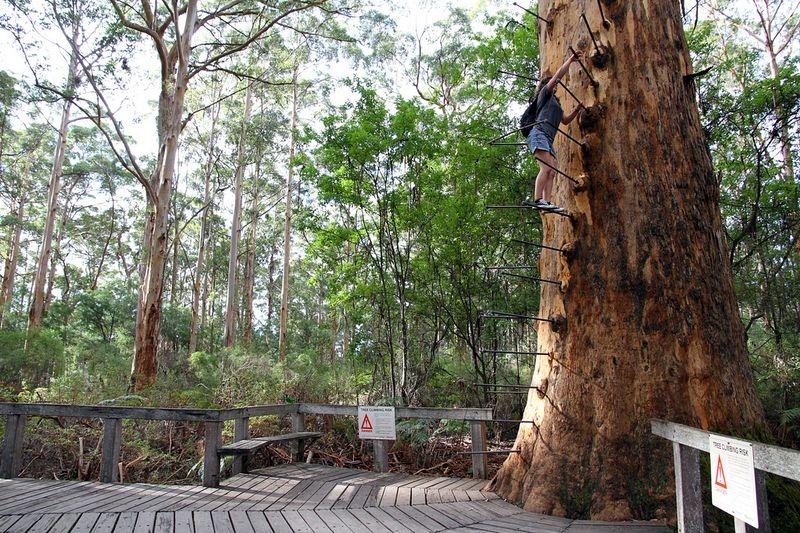 gloucester-tree-4