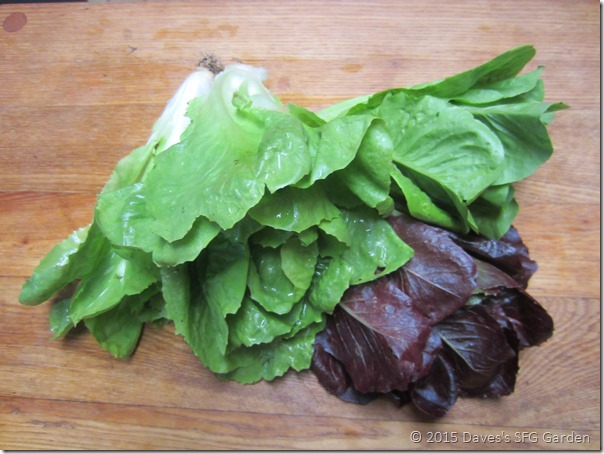 Escarole&lettuce