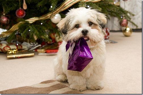 perro navidad (14)