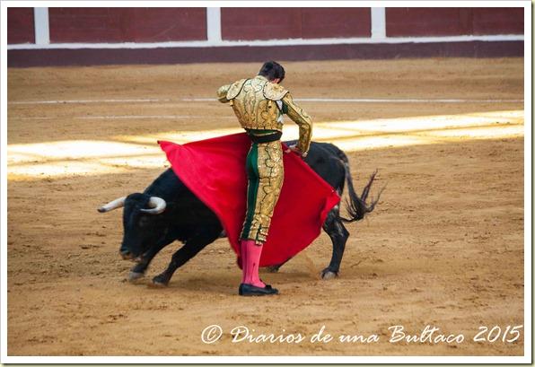 Toros Feria 2015-9877