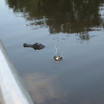 Our Airboat Adventure ride in New Orleans to see the swamps and gators 07242012-28
