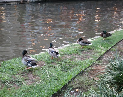 river walk san antonio (1)