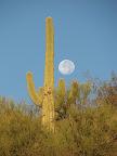 Morning moon 11/4
