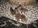 March of the Peabody ducks at the Peabody Hotel in Memphis TN 07202012-16