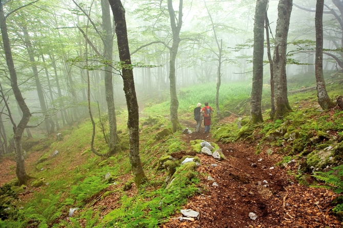 Ofertas de alojamientos restaurantes y turismo activo - Alojamientos en el bosque ...
