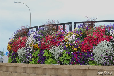 Planting in town