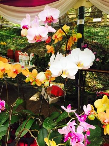 Kuala Lumpur Orchid and Bonsai Show