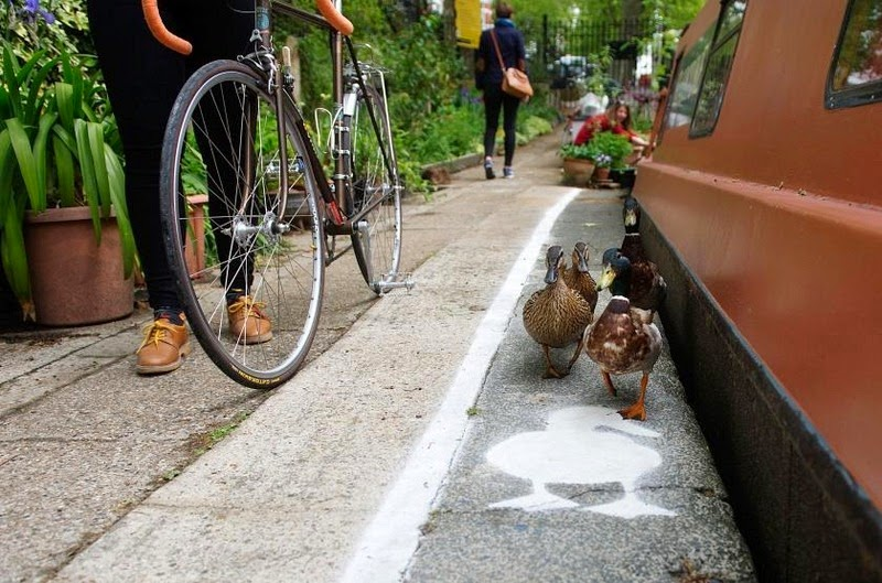 duck-lanes-canal-river-trust-1