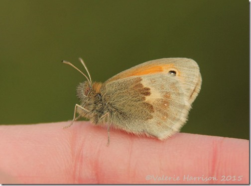 28-Small-Heath